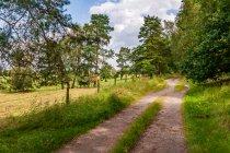 Leśna droga rowerowa w Brandenburgii