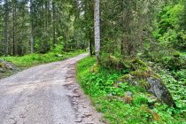 Leśna droga w Dolomitach