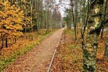 Leśny szlak rowerowy Kaszubskiej Marszruty