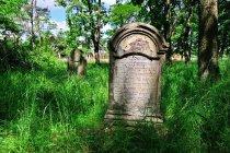 Macewa na cmentarzu żydowskim w Szczucinie