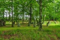 Menhiry w Louisenlund