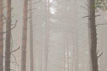 Mgła na trasie