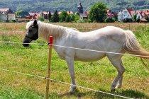 Moda końska
