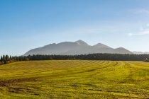 Moja łąka nad Zubercem