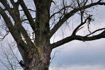Mordowane drzewa koło Chwalęcina