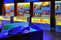 Muzeum Fauny i Flory w Jaworzu