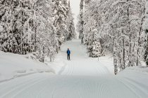 Na biegówkach po śnieżnych trasach Finlandii