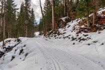 Na leśnym odcinku Rössingloipe