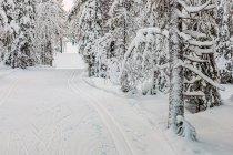 Na nartach biegowych w Ruce