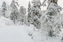 Na trasie narciarskiej dookoła Ruki