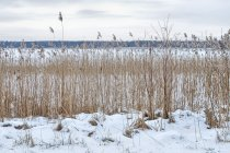 Nad jeziorem Brzozolasek