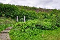 Największy las na Islandii