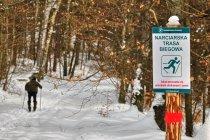 Narciarska trasa biegowa w Nadleśnictwie Kolbudy