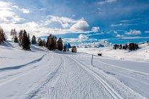 Narciarskie ślady na Alpe di Siusi