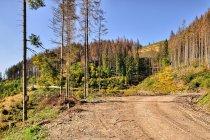 Nawierzchnia trasy rowerowej w Beskidach Kisuckich
