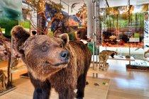 Niedźwiedź z muzeum Muse w Trydencie