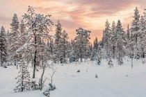 Niesamowite kolory nad lasem w okolicach Ruki