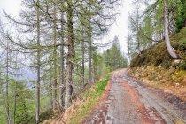 Ostatni odcinek trasy przed Passo Cinque Croci