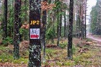 Oznakowanie szlaku papieskiego w Puszczy Augustowskiej