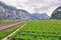 Panorama doliny Adygi - winnice po brzegi