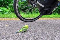 Papuga na drodze rowerowej