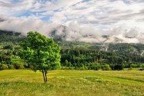 Piękna Val di Fiemme