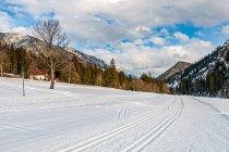 Piękne warunki na bieganie na nartach