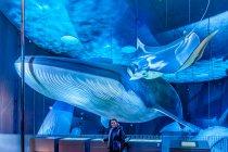 Płetwal błękitny naturalnej wielkości ze Stralsundu