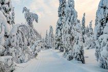Początek długiego zachodu Słońca w Finlandii
