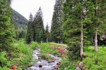 Początek leśnego podjazdu w Dolomitach