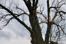 Popalone drzewo - Chwalęcin