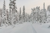 Poranek na narciarskich trasach w Ruce