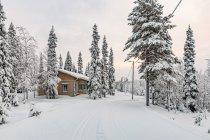 Poranne zimowe klimaty Finlandii