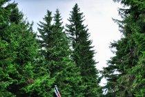 Prace leśne w Górach Izerskich