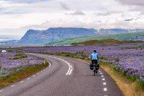 Przez łubinowe pola w stronę Skaftafell