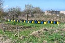 Pszczoły z Gdyni