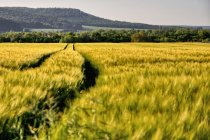 Rolniczy krajobraz Pogórza Wezerskiego