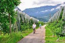 Rowerami po winnicach Trentino