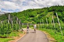 Rowerowa trasa wśród winnic w dolinie Valsugana