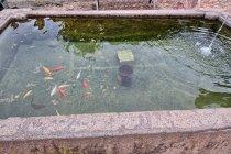 Rybki w ujęciu wody w Pinzano