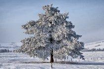 Samotne drzewo w Beskidzie Niskim