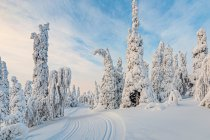 Sceneria szlaku narciarskiego w Kuusamo
