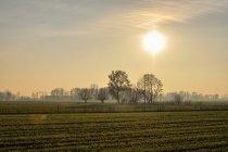 Słońce nad nadnoteckim folwarkiem