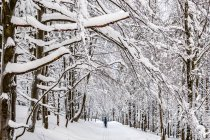 Śnieżne korytarze Gór Bialskich