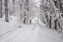 Szlak biegnący Duktem nad Spławami