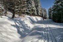 Szlak narciarski