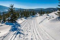 Szlak narciarski na Żmijowcu