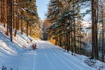 Szlak narciarski przed Przełęczą Śnieżnicką