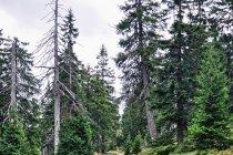 Szlak turystyczny na Halę Szrenicką