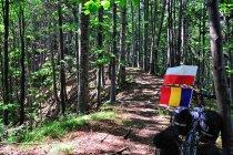 Szlak w kierunku Suczewicy